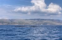 Foto Daniel Vodička